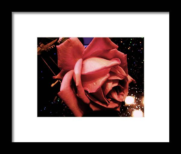 Rose Under Star Configuration Framed Print featuring the photograph Pink Rose by Nereida Slesarchik Cedeno Wilcoxon