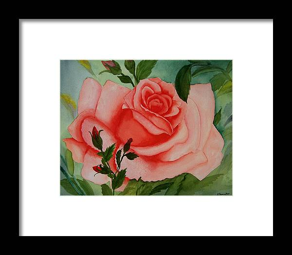 Pink Rose Framed Print featuring the painting Pink Rose by Robert Thomaston