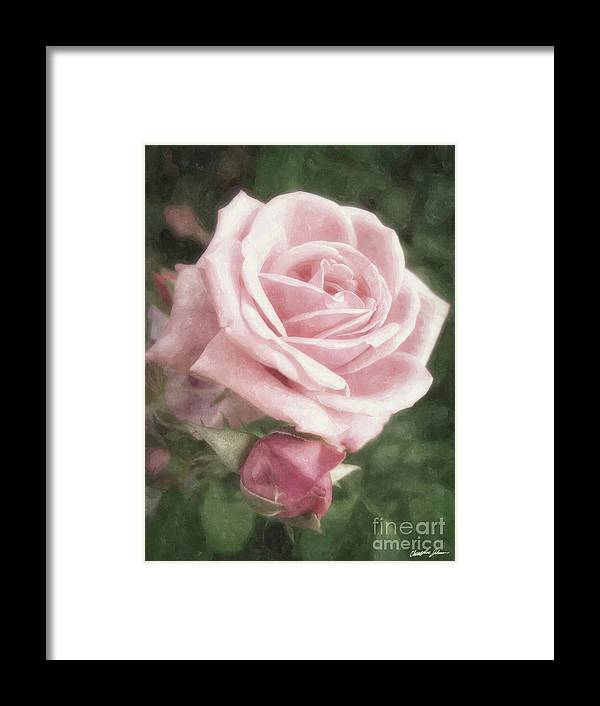 Vintage Framed Print featuring the digital art Pink Roses In Anzures 2 Nostalgic by Christopher Johnson