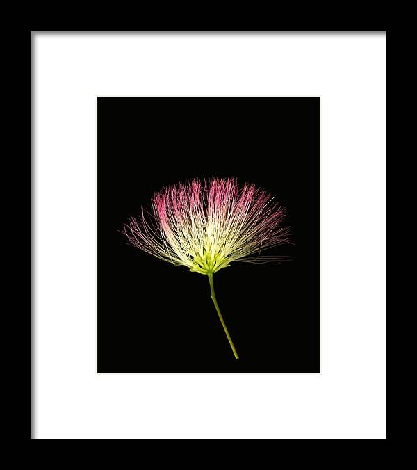 Scanography Framed Print featuring the photograph Pink Silk by Deborah J Humphries