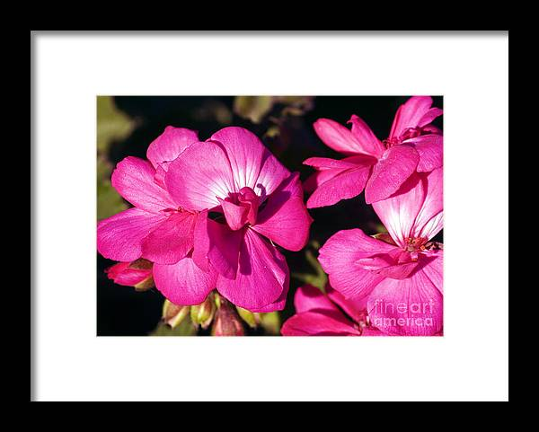 Clay Framed Print featuring the photograph Pink Spring Florals by Clayton Bruster