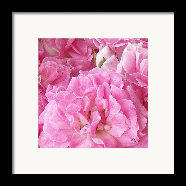 Rose Framed Print featuring the digital art Pink by Tom Romeo