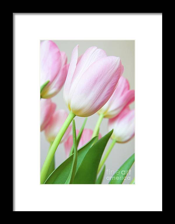 Flower Framed Print featuring the photograph Pink Tulip Flowers by Julia Hiebaum