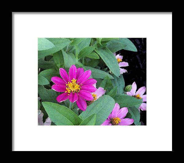 Flowers Framed Print featuring the painting Pinky by Diana Gonzalez