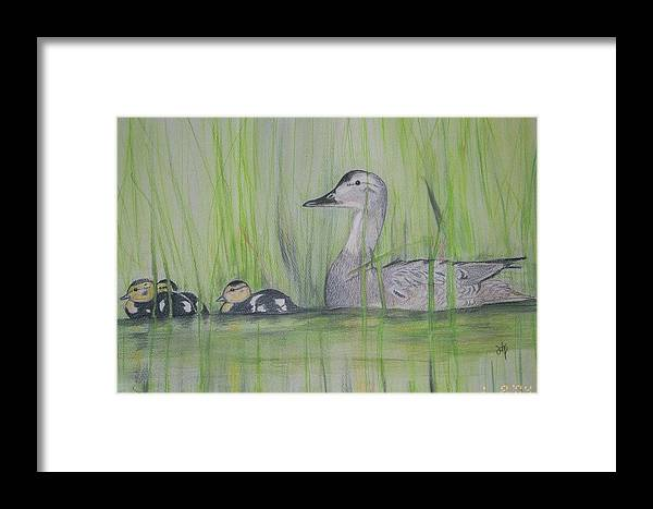 Pintail Ducks Framed Print featuring the painting Pintails In The Reeds by Debra Sandstrom