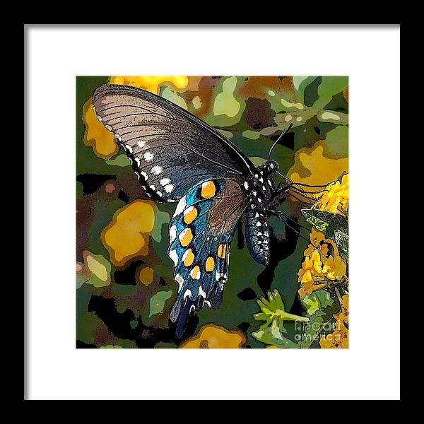 Pipevine Framed Print featuring the photograph Pipevine Swallowtail Butterfly by David Smith