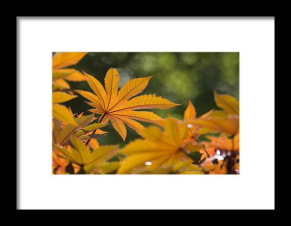 Plant Framed Print featuring the photograph Plants Of Beauty by Chad Davis
