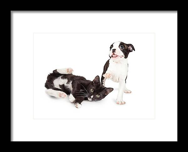 Adorable Framed Print featuring the photograph Playful Kitten And Puppy Playing by Susan Schmitz