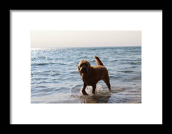 Dog Framed Print featuring the photograph Playful Puppy by Elle Dyer