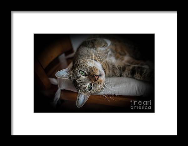 Cute Framed Print featuring the photograph Playfull Lazy Kitten by Alex Hiemstra