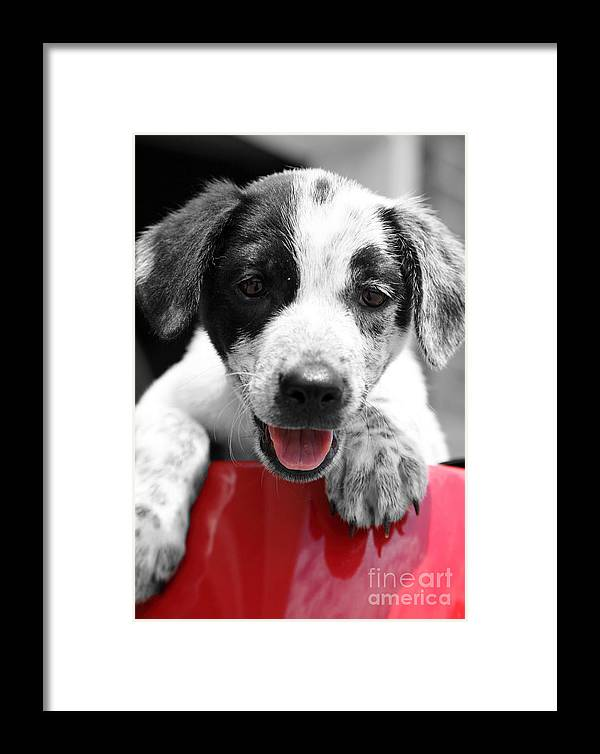 Puppy Framed Print featuring the photograph Playing by Amanda Barcon