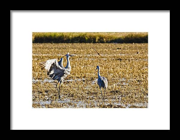 Nature Framed Print featuring the photograph Playing Toss The Stick by Charlie Osborn