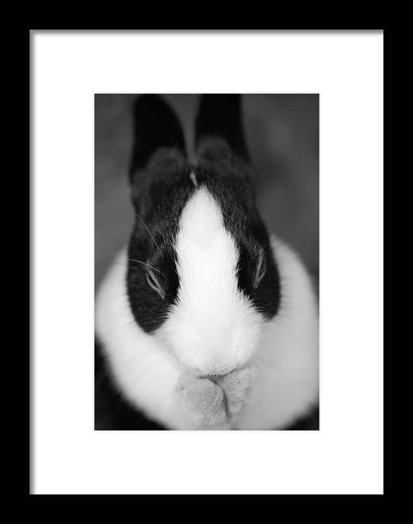 Rabbit Framed Print featuring the photograph Please Be Carrots by Fraser Davidson