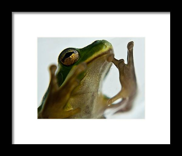 Frog Framed Print featuring the photograph Please Not In A Frogs Eye by Douglas Barnett