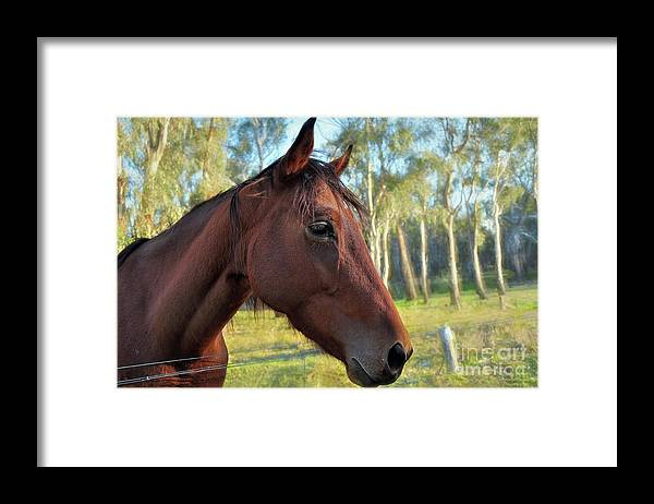 Photography Framed Print featuring the photograph Please Talk To Me... by Kaye Menner