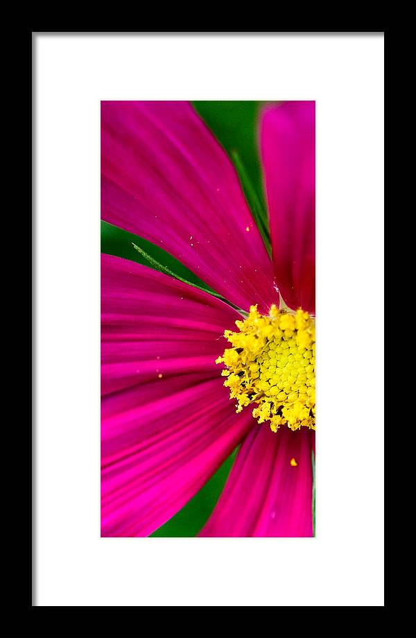 Plink Framed Print featuring the photograph Plink Flower Closeup by Michael Bessler