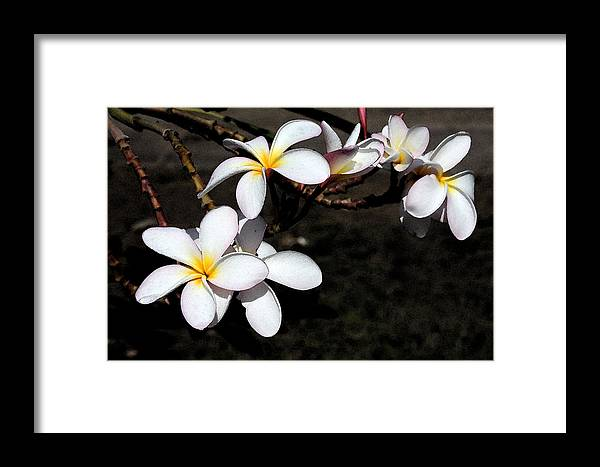 Watercolor Framed Print featuring the photograph Plumeria 1 by Doug Johnson