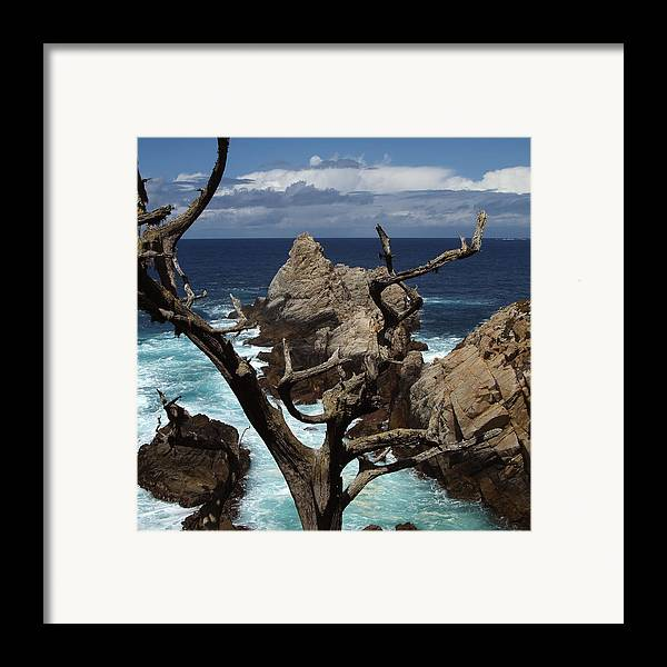 Carmel Framed Print featuring the photograph Point Lobos Rocks And Branches by Charlene Mitchell