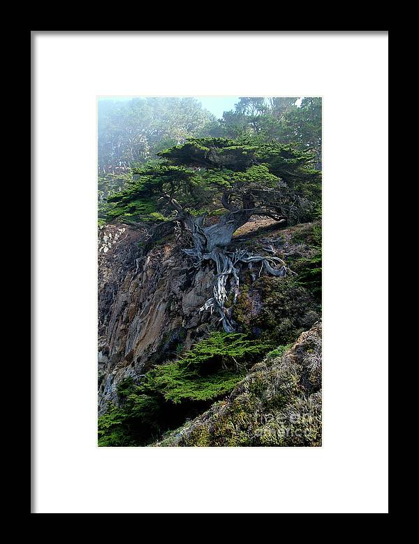 Landscape Framed Print featuring the photograph Point Lobos Veteran Cypress Tree by Charlene Mitchell