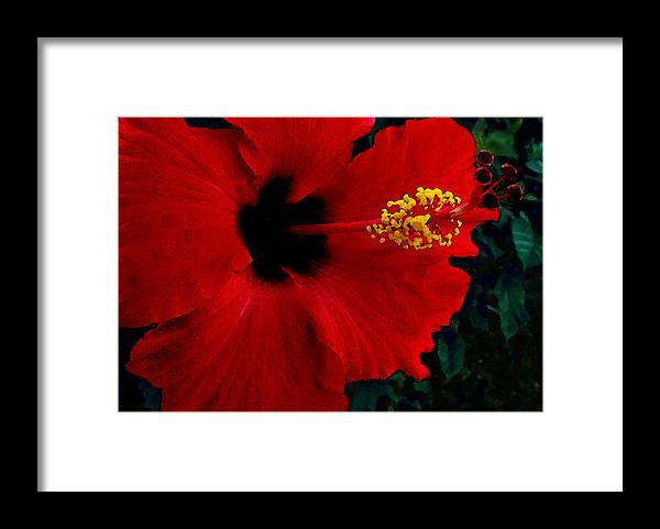 Red Hibiscus Framed Print featuring the photograph Poison Passion and Seduction by James Temple