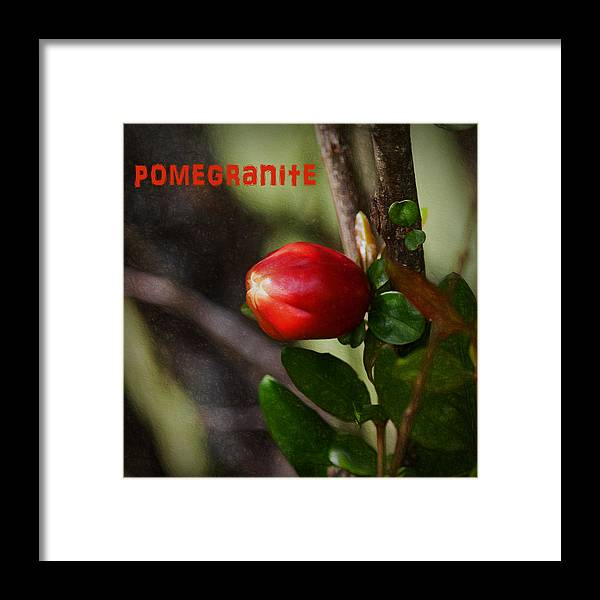 Pomegranite Framed Print featuring the photograph Pomegranite Art II by Mary Bellew