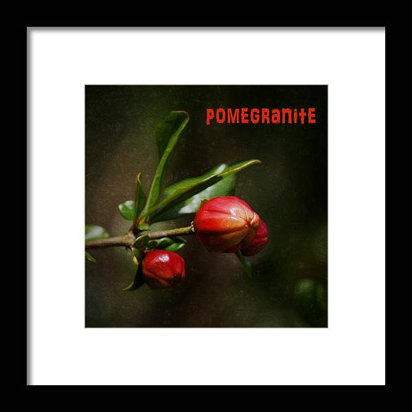 Pomegranite Framed Print featuring the photograph Pomegranite Art by Mary Bellew