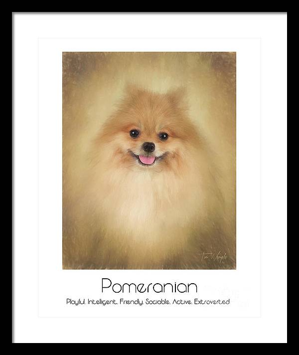 Pomeranian Framed Print featuring the digital art Pomeranian Poster by Tim Wemple