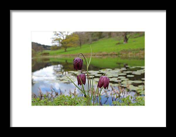 Framed Print featuring the photograph Pond Dwellers by Rosie Knightley