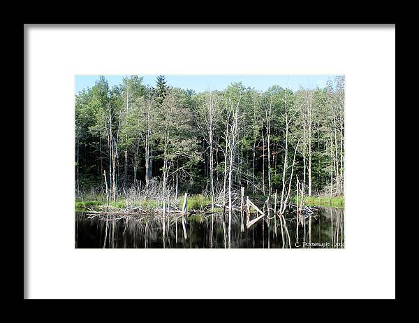 Ponds Framed Print featuring the photograph Pond on Route 39 by Carolyn Postelwait