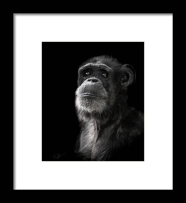 Chimpanzee Framed Print featuring the photograph Ponder by Paul Neville