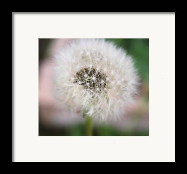 Dandelion Framed Print featuring the photograph Poof by Lynnette Johns