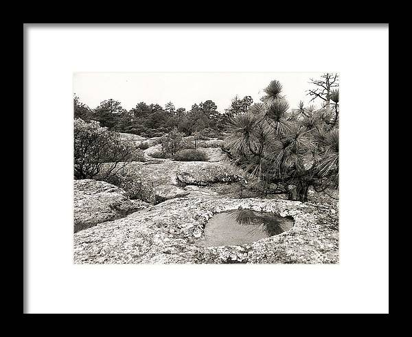 Photograph Framed Print featuring the photograph Pool Reflection With Tree by Patricia Bigelow