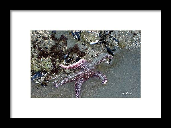 Starfish Framed Print featuring the photograph Poor Little Starfish by Elizabeth Klecker
