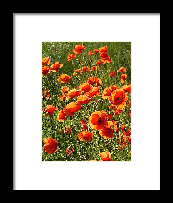 Poppies Framed Print featuring the photograph Poppies by Bob Kemp