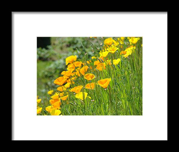 �poppies Artwork� Framed Print featuring the photograph Poppies Hillside Meadow Landscape 19 Poppy Flowers Art Prints Baslee Troutman by Baslee Troutman