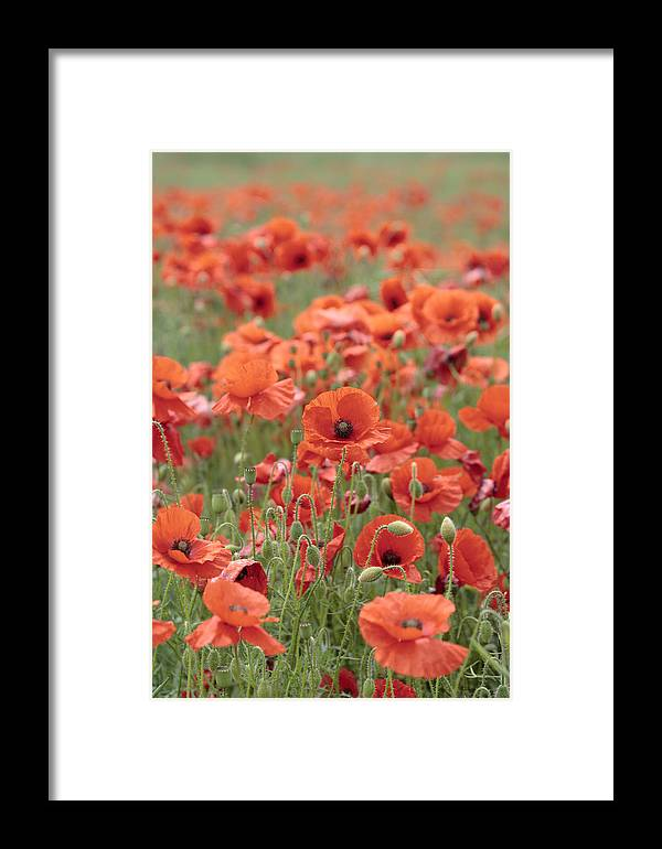 Poppy Framed Print featuring the photograph Poppies by Phil Crean