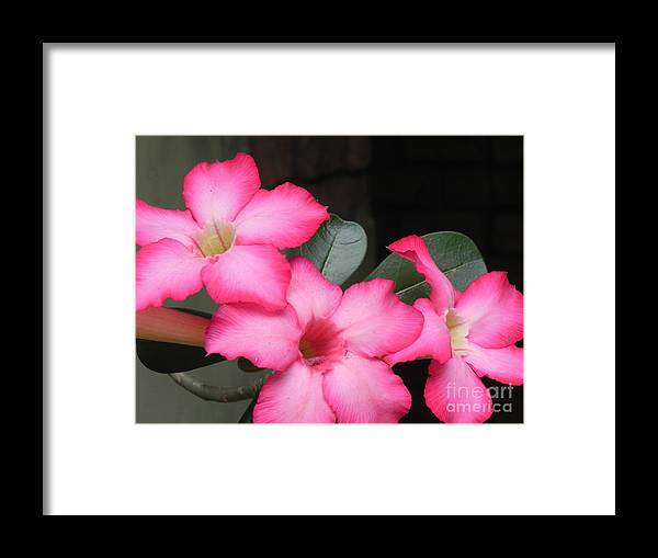 Photography Framed Print featuring the photograph Poppin Pink Flowers by Chrisann Ellis