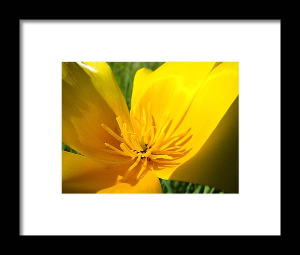 �poppies Artwork� Framed Print featuring the photograph Poppy Flower Close Up Macro 20 Poppies Meadow Giclee Art Prints Baslee Troutman by Baslee Troutman