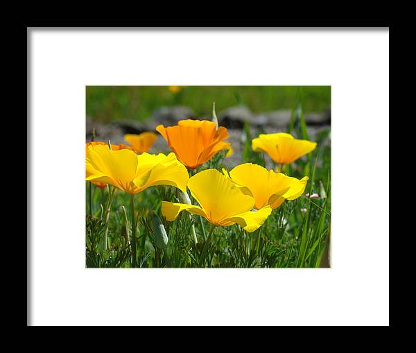 �poppies Artwork� Framed Print featuring the photograph Poppy Flower Meadow 14 Poppies Orange Flowers Giclee Art Prints Baslee Troutman by Baslee Troutman