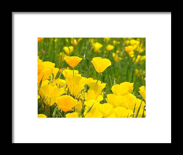 Poppy meadow art prints orange california poppy flower baslee framed poppy framed print featuring the photograph poppy meadow art prints orange california poppy flower baslee by mightylinksfo