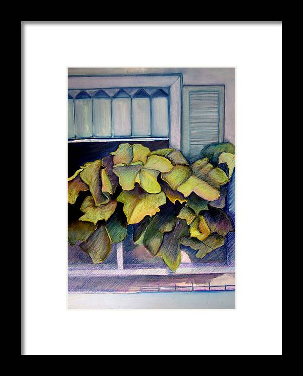 Plants Framed Print featuring the painting Port Norfolk Window Box by Diana Davenport