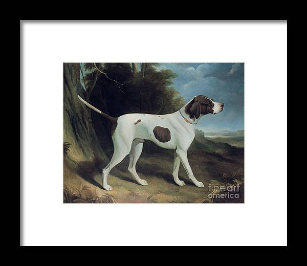 Portrait Of A Liver And White Pointer (oil On Canvas) By George Garrard (1760-1826) Framed Print featuring the painting Portrait Of A Liver And White Pointer by George Garrard