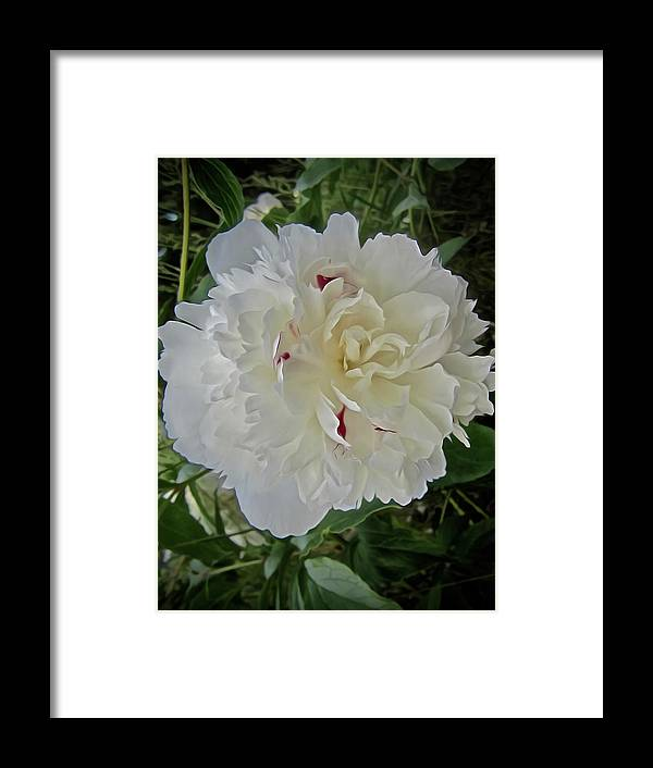 Peony Framed Print featuring the photograph Portrait Of A Peony by Elizabeth Tillar