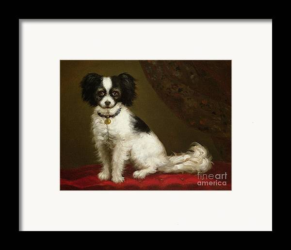 Portrait Of A Spaniel By Anonymous Framed Print featuring the painting Portrait Of A Spaniel by Anonymous
