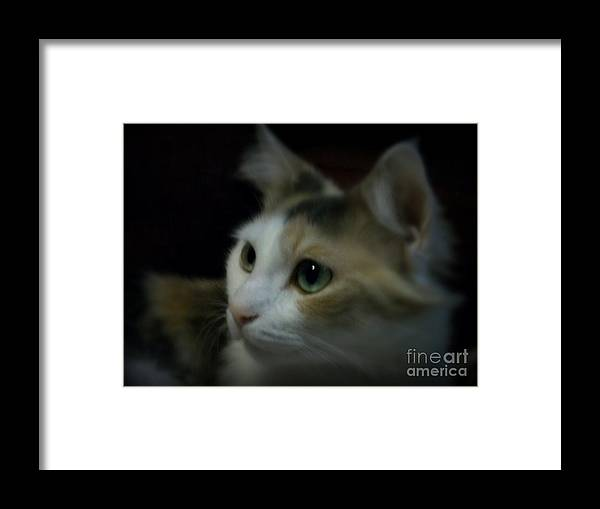 Cat Framed Print featuring the photograph Portrait Of Miss Kitty by Emily Kelley
