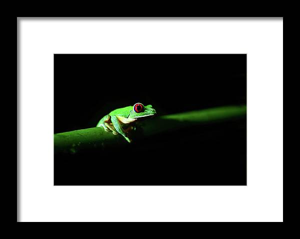 Adorable Framed Print featuring the photograph Portrait Of Red-eyed Tree Frog Under The Light At Night by Srdjan Kirtic