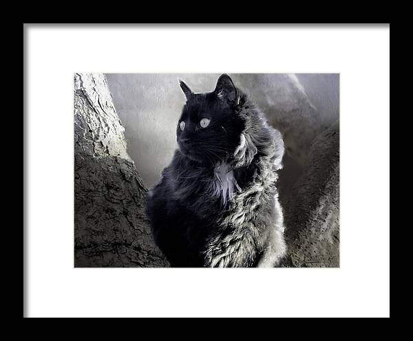 Theresa Campbell Framed Print featuring the photograph Portrait Of Smoky by Theresa Campbell