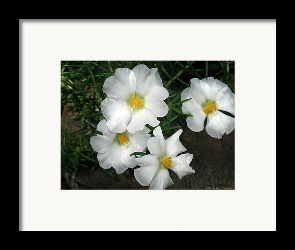 Flowers Framed Print featuring the photograph Portulaca by Linda Ebarb