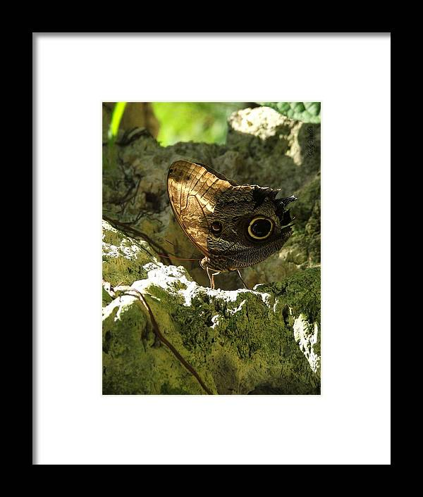 Butterfly Framed Print featuring the photograph Posing In The Light by Judy Waller