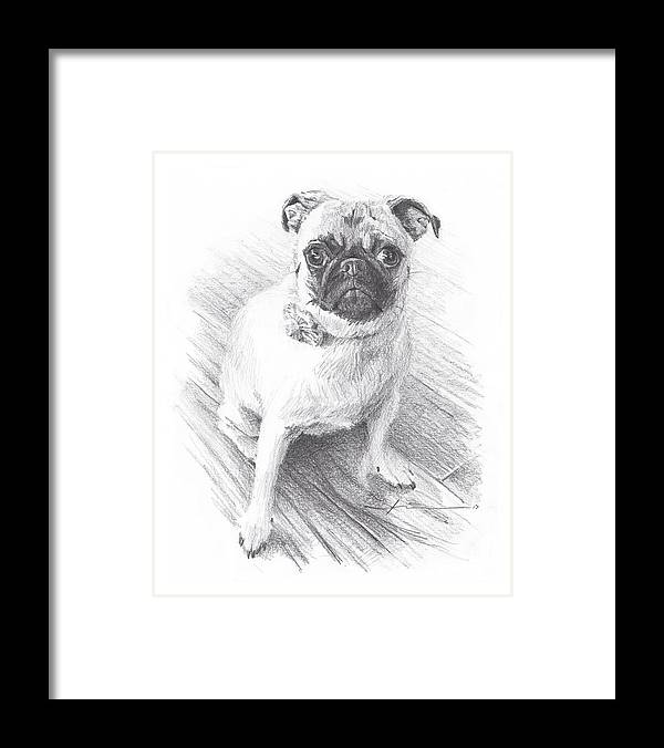 Www.miketheuer.com Posing Pug Pencil Portrait Framed Print featuring the drawing Posing Pug by Mike Theuer